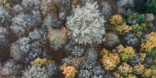 Lasy chorują jak jeszcze nigdy dotąd