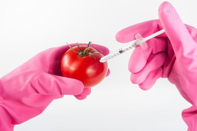 W Japonii zaczęto sprzedawać pomidory modyfikowane genetycznie, które zapobiegają wysokiemu ciśnieniu krwi